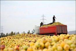 سفر معاون باغبانی وزیر جهاد کشاورزی به ارومیه