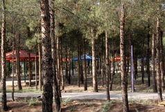 هیچ درختی در اجرای طرحهای عمرانی و ترافیکی قم قطع نمیشود