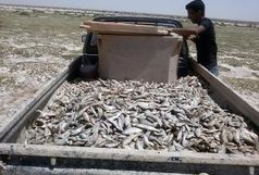 کاهش آب محل زیست و کمبود اکسیژن و زباله = علت تلف شدن ماهی ها