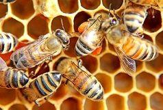 تولید سالانه ۵۰۰ تن عسل مرغوب در نهاوند