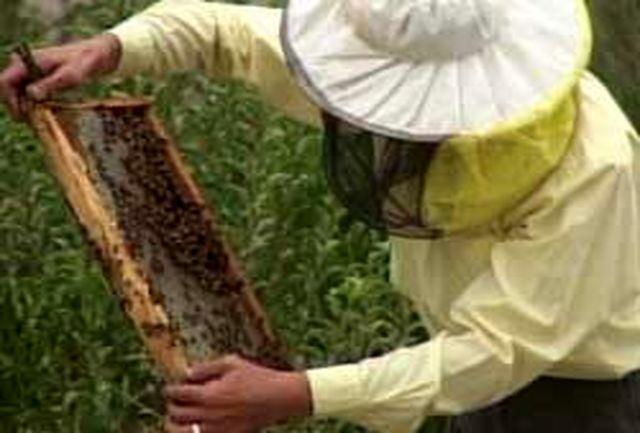 افزایش 3برابری تولید عسل با روشهای نوین در مهاباد