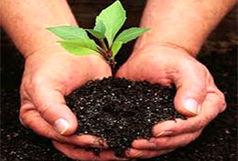 آغاز کاشت پاییزه درخت در مناطق مختلف تبریز