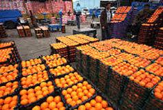 مشکلی در عرضه پرتقال شب عید وجود ندارد