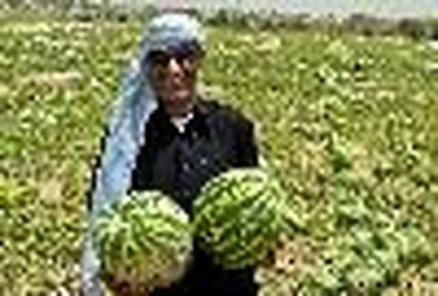 محصولات کشاورزی صادره شده به عراق از مرز مهران به 470هزارتن رسید