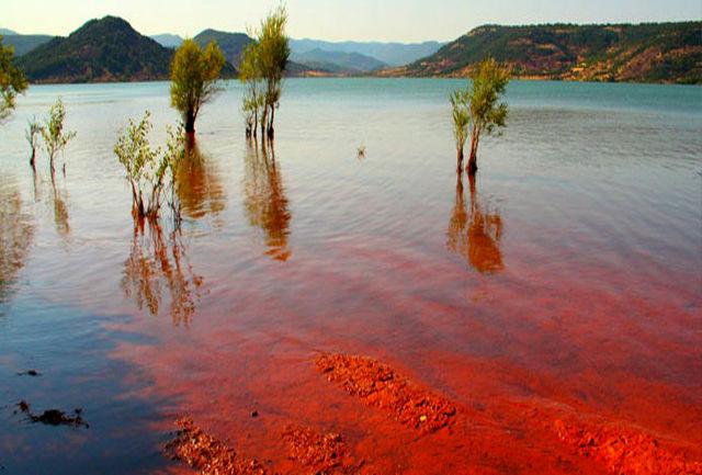 جلبک کشنده قرمز آب شهر چابهار و کنارک را قطع کرد