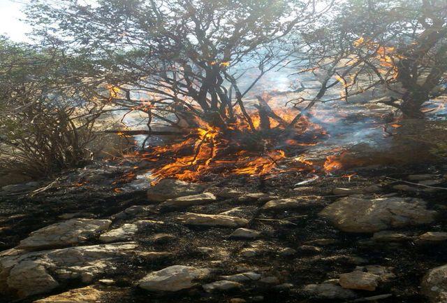 مجازات عاملان آتش سوزی جنگلهای داراب
