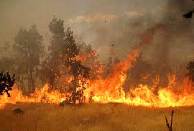 جنگل های استان گلستان بار دیگر طعمه آتش شد