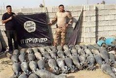 عروس و دامادهای به هلاکت رسیده داعشی / ببینید