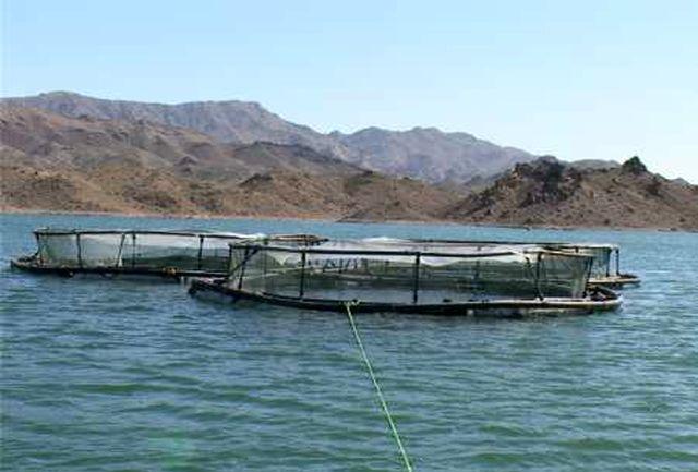 آغاز تولید و تکثیر لارو از ماهیان بومی خلیج فارس