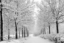 رمز سالم و پرانرژی بودن در فصل سرما