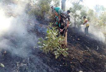 نجات بلوطها از آتش