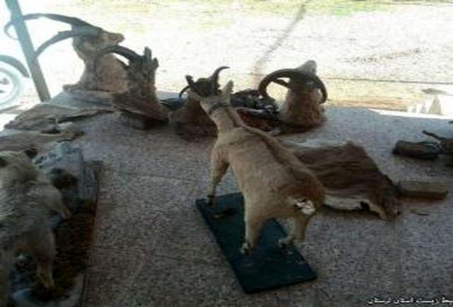 دستگیری شکارچی متخلف همراه با حیوانات تاکسی درمی شده در خرم آباد
