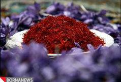 «سرایان»، دارنده رتبه دوم تولید زعفران