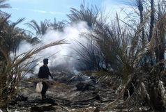 50 نفر نخل در روستای دهک سراوان طعمه حریق شد