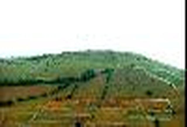 100هکتار از اراضی کشاورزی تغییر کاربری شده در بندر خمیر شناسایی شد