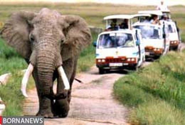 بازداشت 2 فیل فراری در ایستگاه اتوبوس