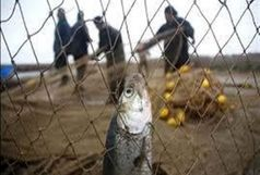 پنج متخلف شکار و صید در استان مازندران دستگیر شدند