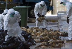 پرندگان وحشی از قربانیان اصلی ویروس آنفلوانزا
