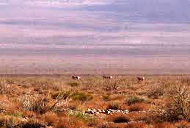 مشاهده یوزپلنگ ایرانی توسط محیط بانان پارک ملی توران