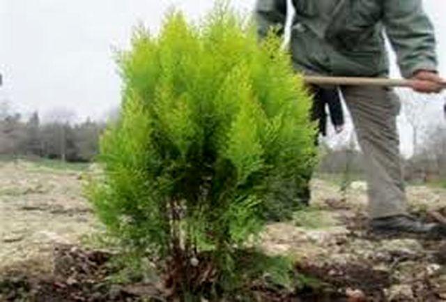 ۳۰ هزار اصله درختچه در بین شهروندان اردبیل توزیع میشود
