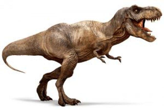 جای پای جالب دایناسور ۸۰ میلیون سال پیش/ ببینید