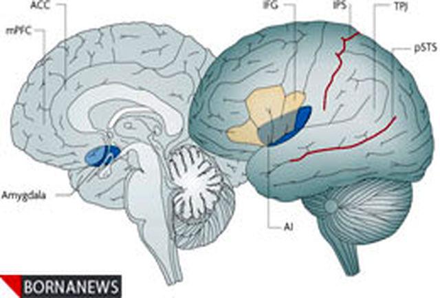 تفاوت در ساختار مغز محبوب ها