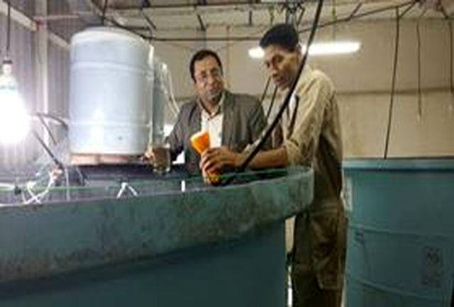 بازدید مدیر کل شیلات هرمزگان از بندر صیادی ومرکز بازسازی ذخایر کلاهی