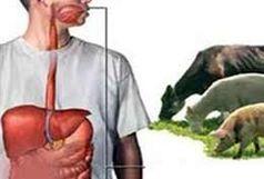 بیماری تب کریمه کنگو را جدی بگیریم