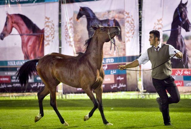 آغاز جشنواره ملی اسب اصیل در تاقبستان