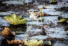 ممنوعیت واردکردن گونه های گیاهی و جانوری غیربومی مُضر به تالابهای کشور