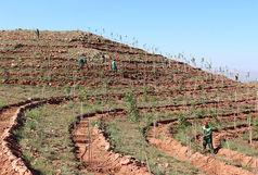ادامه کاشت نهال در راستای طرح توسعه ۲۰۰ هکتاری عینالی