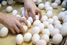 رُسوایی تخممرغ در کرهجنوبی؛ رئیسجمهور عذرخواهی کرد