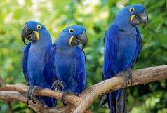 کشف 500 قطعه پرنده زینتی قاچاق در سراوان