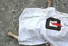 کشف جسد یکی دیگر از مفقودان سیل علیآباد کتول
