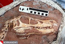 کشف فسیلهای 50 هزار ساله در محلات