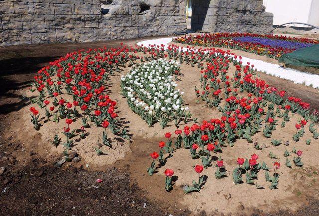 آغاز شماره معکوس برای میزبانی دهکده ساحلی چی چست از هفتمین جشنواره گلها