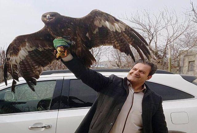 تحویل عقابی دشتی از نطنز به مسئولان پارک پردیسان تهران