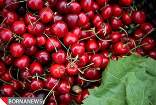 ماجرای مخفیانه میوه خوردن آیت الله تهرانی در مجلس خبرگان رهبری