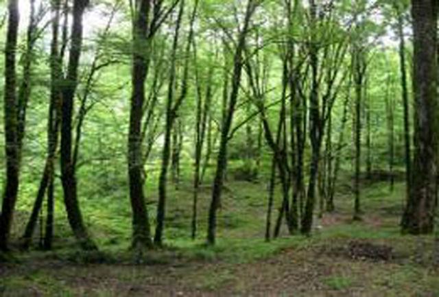 استاندار مازندران خواستار ایجاد پایگاه ثابت حفاظت از جنگل مازندران شد