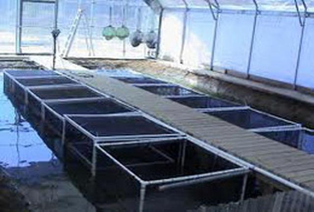 اجرای طرح پرورش ماهی در قفس