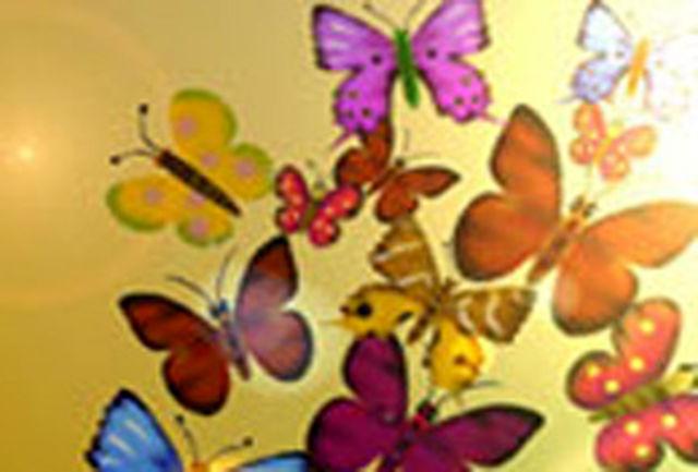 پروانه ها در بیست استان به پرواز در میآیند