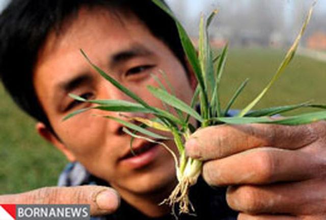 وخامت خشکسالی در چین