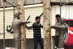 درختان خشکیده خیابان ولیعصر به اثر هنری تبدیل می شوند