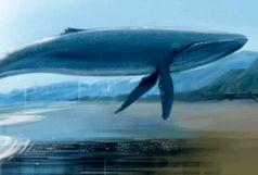 نهنگ آبی دانش آموز اصفهانی را به کام مرگ کشید