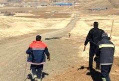 نجات یک قلاده «گرگ» گرفتار شده در شهرستان سنندج