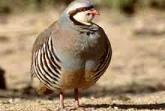 ۳۵ قطعه پرنده وحشی با تلاش محیط زیست در حاشیه زاینده رود کشف شد