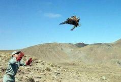 رهاسازی 235 قطعه پرنده در طبیعت خراسان شمالی از ابتدای امسال