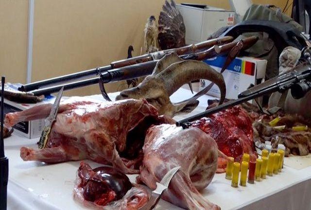 جریمه سنگین برای عاملان شکار غیر مجاز دو کل وحشی