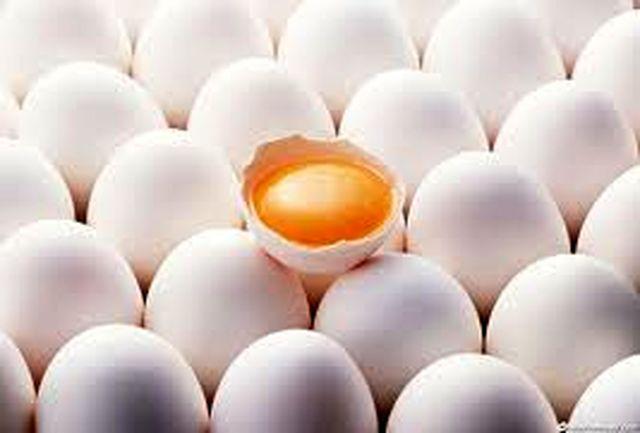 رتبه سوم استان در تولید تخم مرغ در کشور