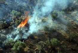 آماده کمک به کشورهمسایه برای مهار آتش سوزی جنگل های مرزی هستیم